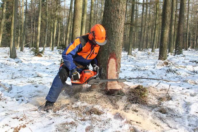 FOWI 19 Motorsäge,  Durchforsten von Waldbeständen, Gooß