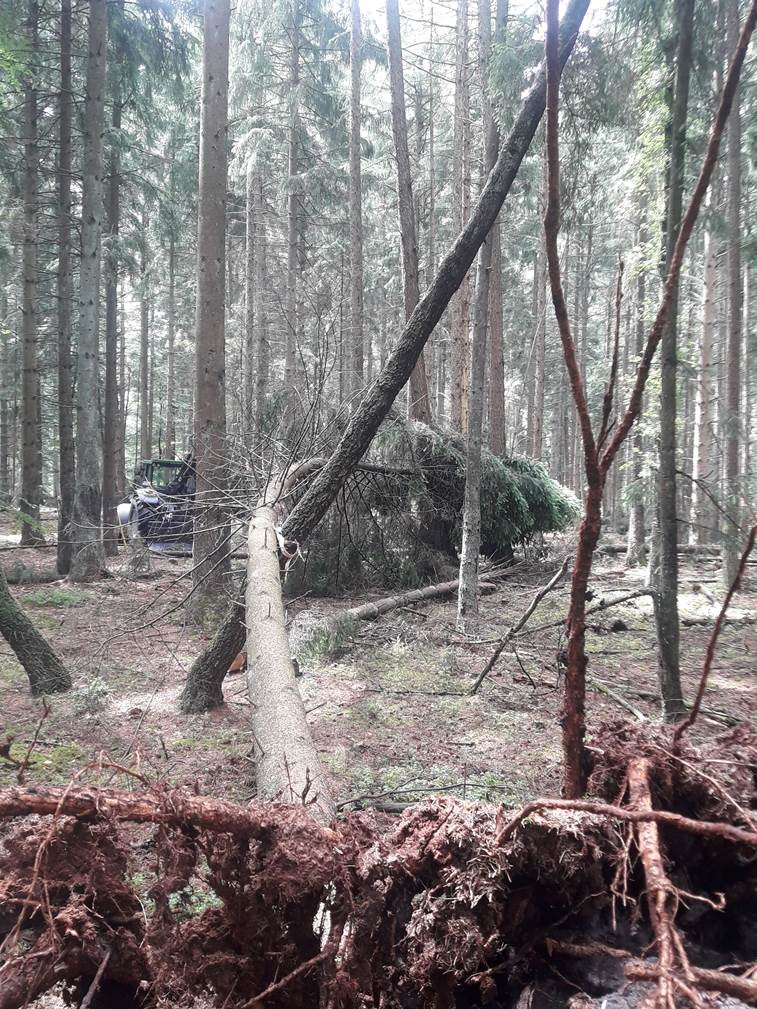 Holz unter Spannung  Fowi 19